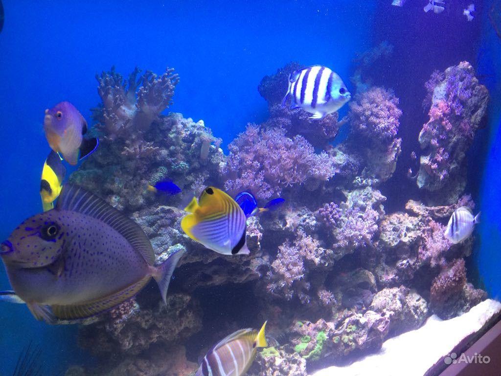 Продаю морской аквариум
