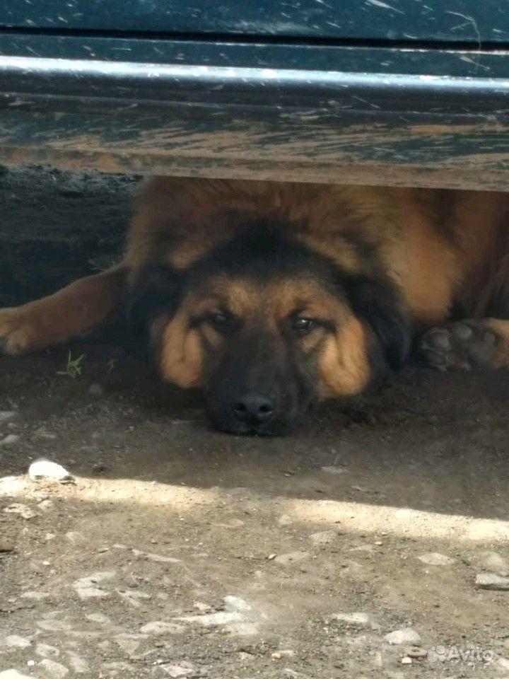 Отдам собак в Омске - фотография № 3