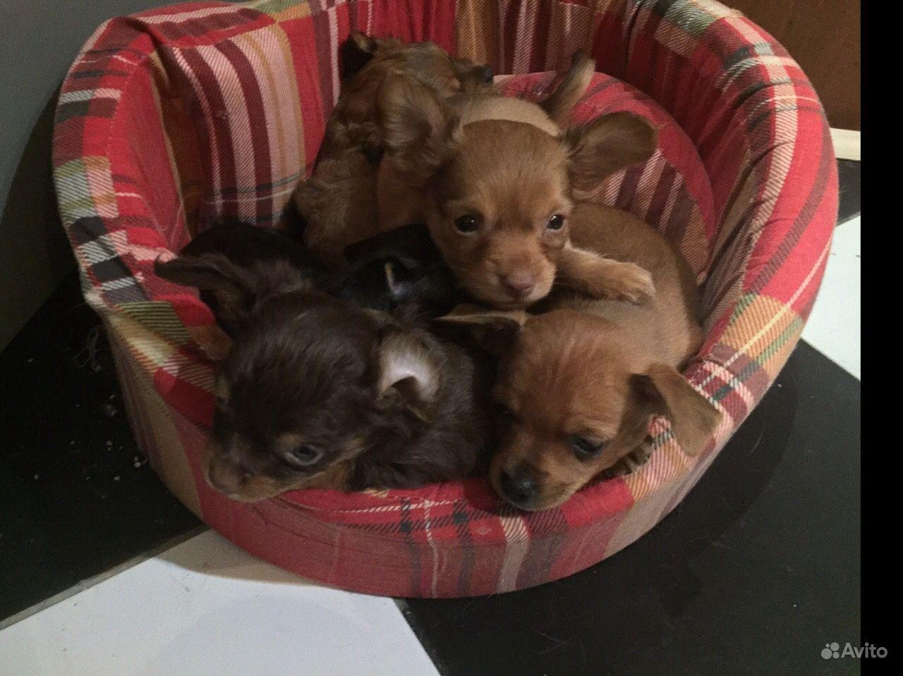 Продам милых щенков