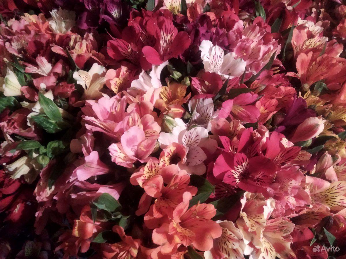 Цветы свежие альстромерия купить на Зозу.ру - фотография № 3