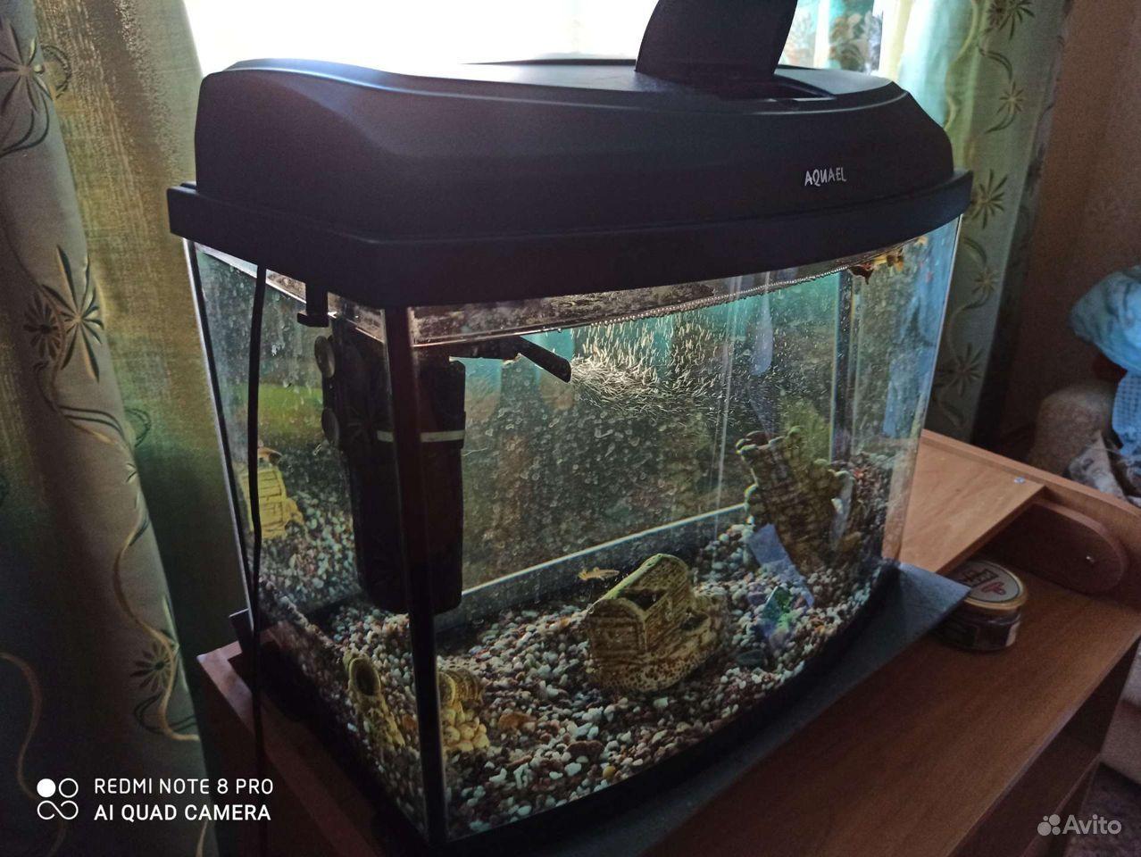 Аквариум, рыбки гуппи купить на Зозу.ру - фотография № 5