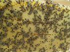 Продам пчёл, мед