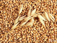 Объявление продам пшеницу продажа готового бизнеса и коммерческой недвижимости в чехии