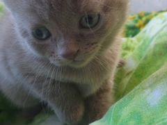 Возьму белого котенка на авито красноярск