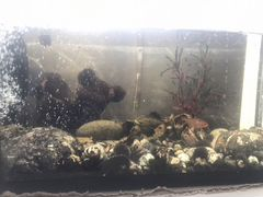 Аквариум с рыбками и фильтром