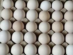 Яйцо инкубационное бройлера