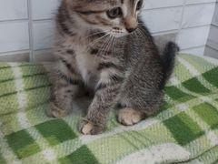 Кошечка 2 месяца