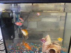 Аквариум с 10 рыбами
