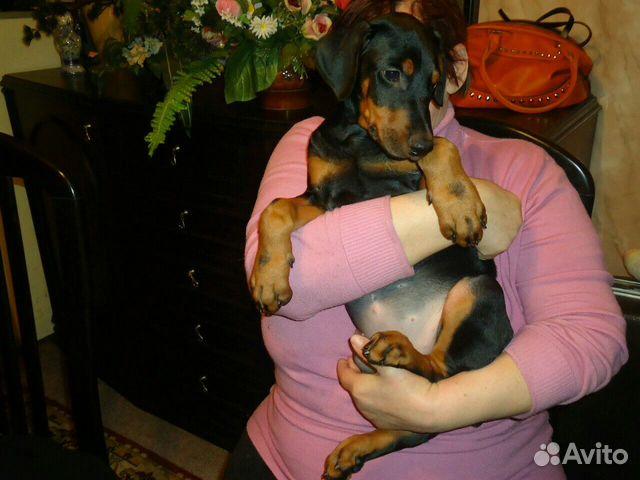зад купить щенка добермана в липецке тумбочка