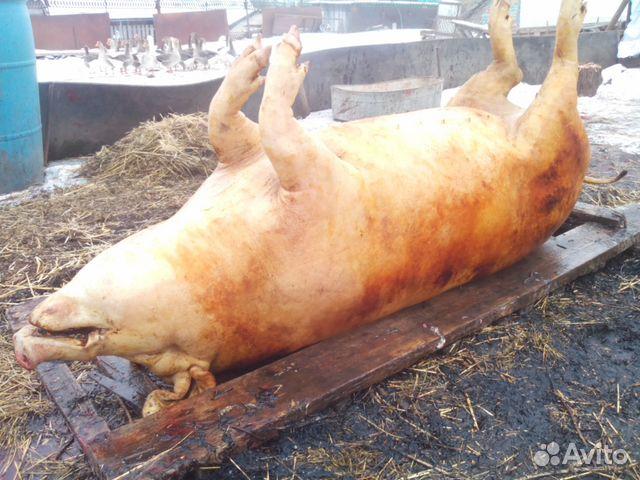 купить свинину в растове шерсти, кашемира или