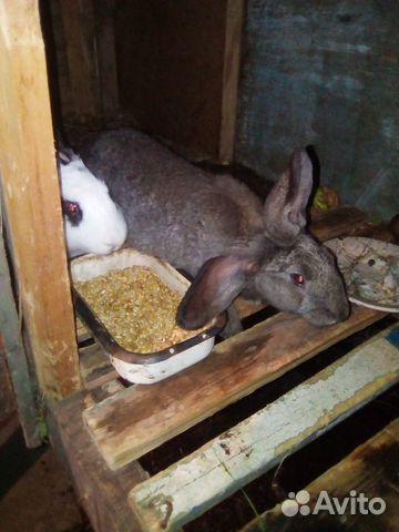 Кролики в москве на авито