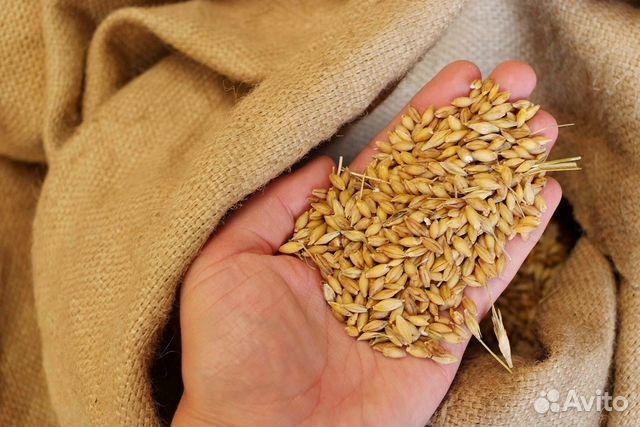 Подать объявление о покупке, продаже и поставках зерна и круп в %city_pre%.