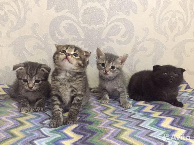 рекомендуем все котята в добрые руки фото саранск юге острова