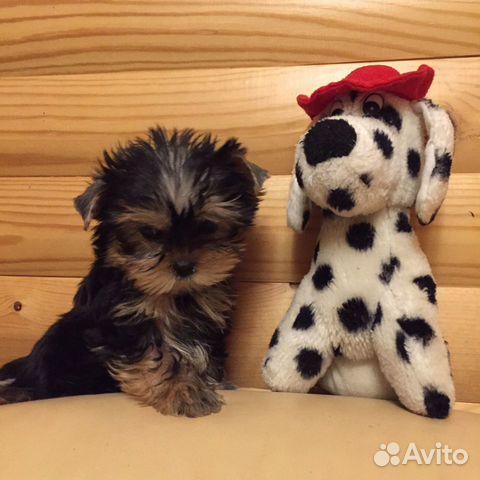 Милые щеночки купить на Зозу.ру - фотография № 3