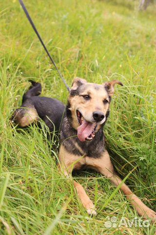 Красивейший пёс в дар в добрые руки купить на Зозу.ру - фотография № 2