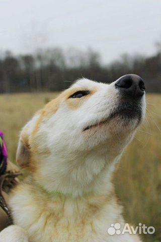Отдам щенка девочку купить на Зозу.ру - фотография № 6