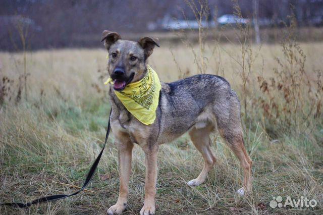 Пёс Смайлик в добрые руки купить на Зозу.ру - фотография № 2