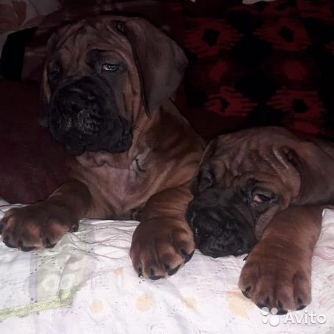 Ми Кюн Доса(Великая собака красоты) (Корейский мас купить на Зозу.ру - фотография № 5