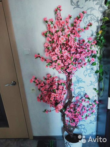 Дерево сакура купить 1