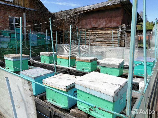 Пасека, ульи, пчелы (9 семей) 89220008190 купить 4