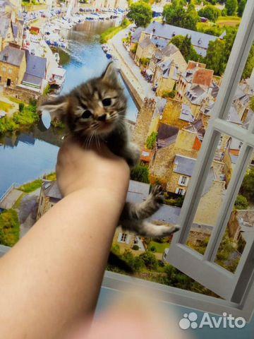 Кошка 89170821738 купить 7