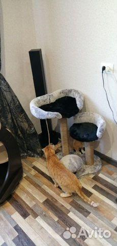 Домики для кота купить 3
