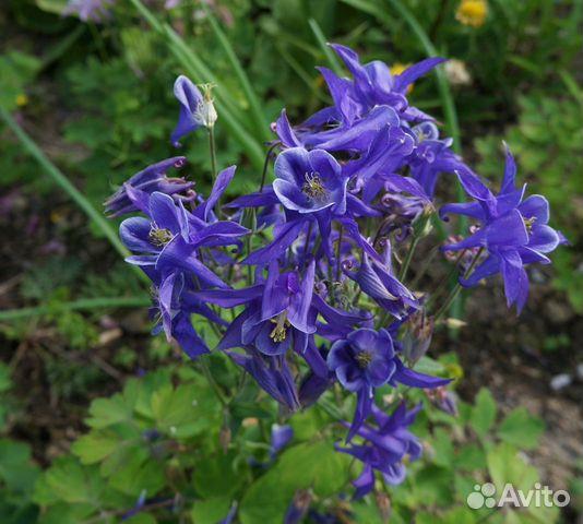 Цветы садовые купить 1