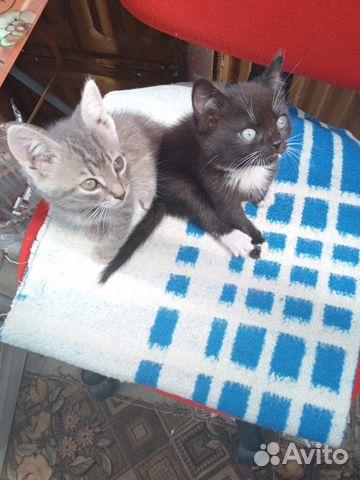 Кошка 89606708188 купить 1