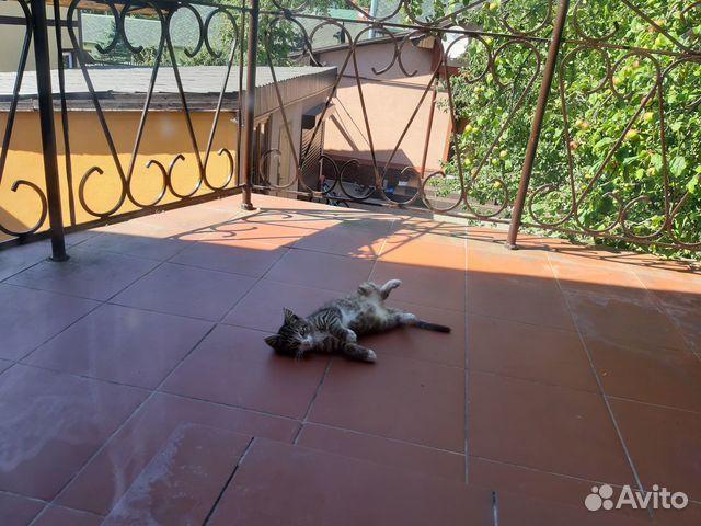 Котенок (кот) в добрые руки