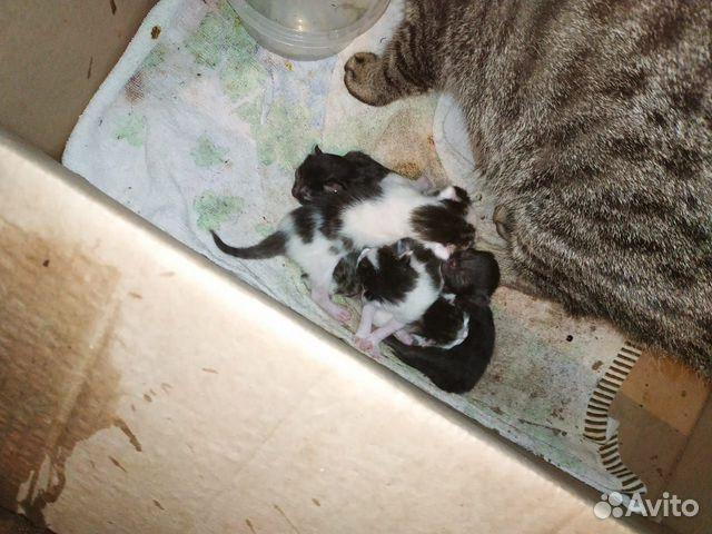 Кошка и 5-еро котят  89638099482 купить 6