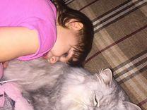 Кошка в добрые, ответственные, любящие руки