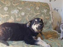 Забава маленький щенок — Собаки в Геленджике