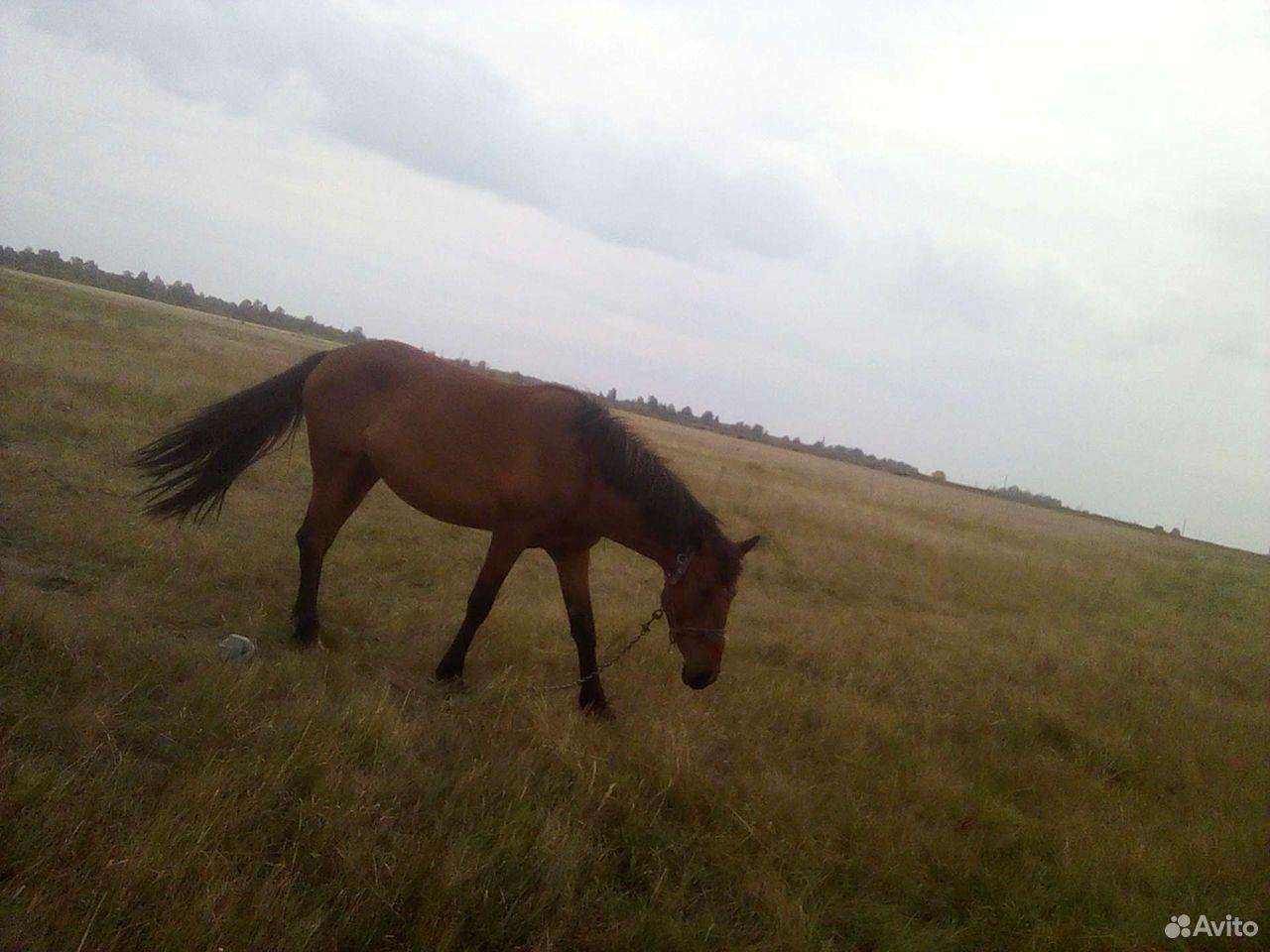 Лошадь жеребушка  89502100369 купить 2
