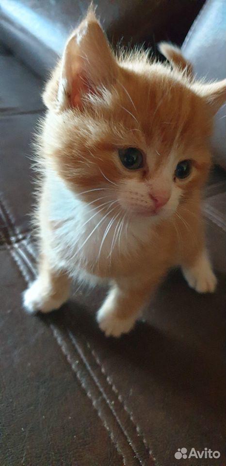 Kätzchen kostenlos in gute Hände  89292004111 kaufen 8