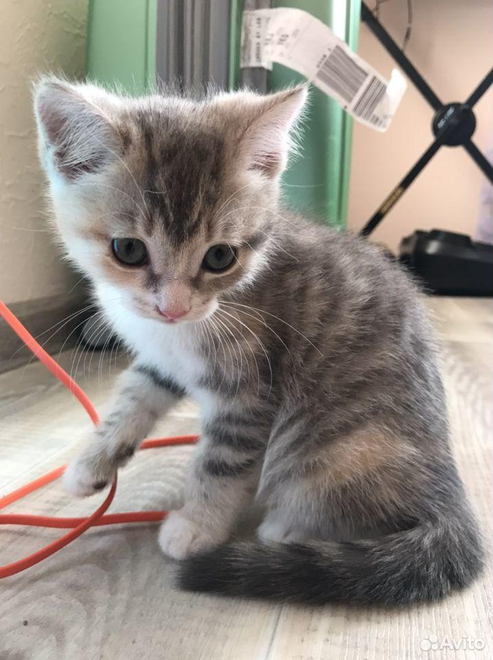 Отдам котят  89132857443 купить 1