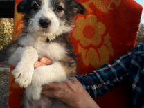 Щенок — Собаки в Геленджике