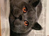 Картина Британский кот(алмазная живопись)