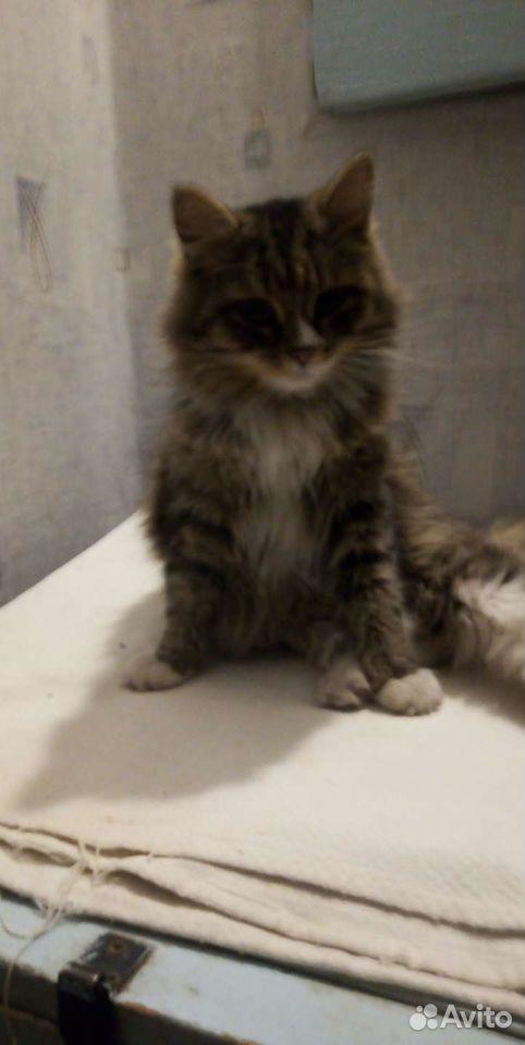 Кошка  89026764604 купить 1