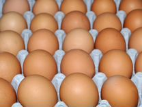 Бройлеры цыплята Кобб-500, Росс-308, яйцо бройлера