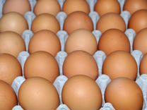 Бройлеры Кобб-500, яйцо, гуси,индюшка/несушка/утка