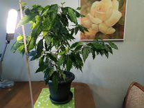Растения в горшках