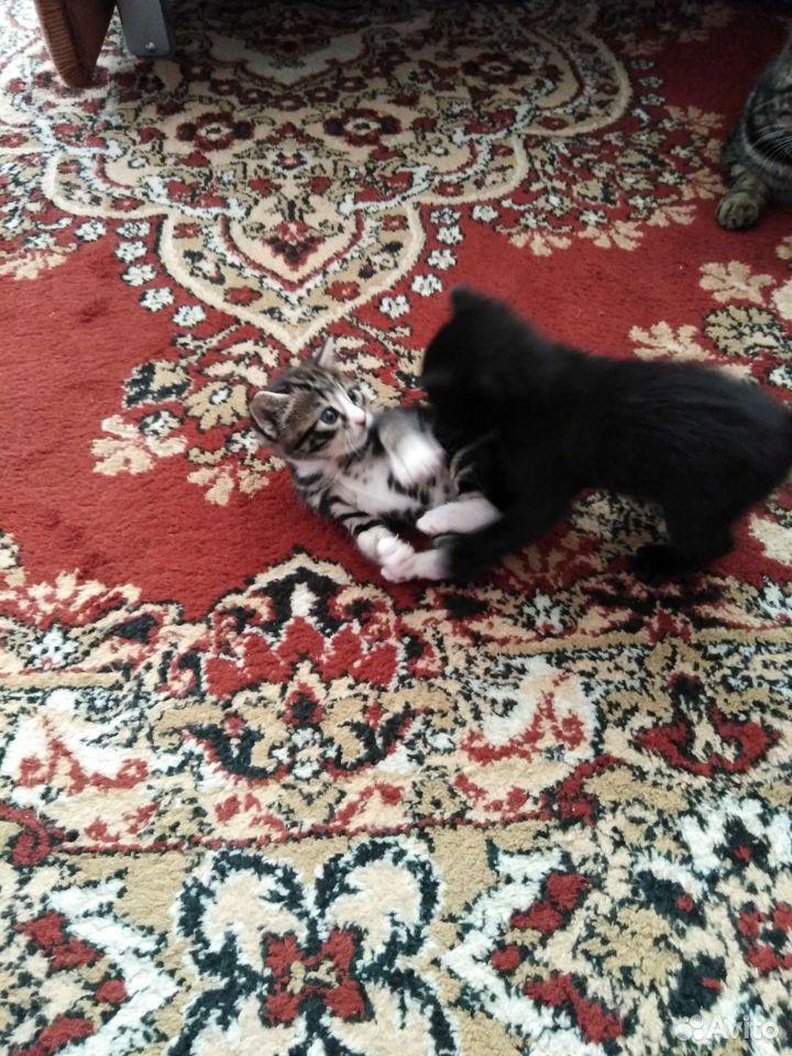 Котята даром  89841611281 купить 1